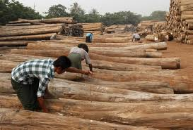 Malaysia mục tiêu xuất khẩu 16 tỷ USD gỗ năm 2020